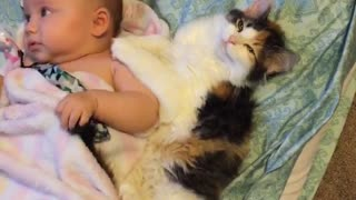 Cute kitten preciously cuddles with sweet baby - Video