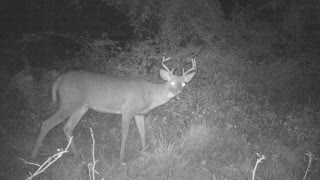 pa 8 point buck busts game camera