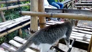Homeless Cat - Video