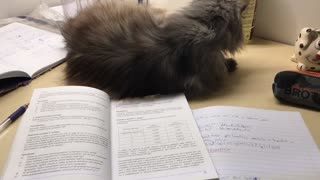 Kitty Puts a Stop to Study Time
