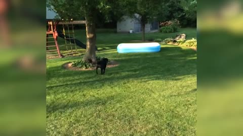 Dog Plays Hide And Seek With Kids Under Inflatable Pool