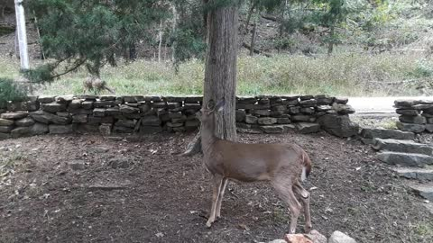 Woman Chats With Her Pet Deer
