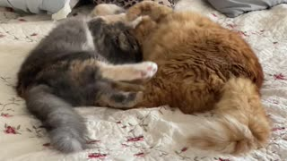 Cats playing on bed!