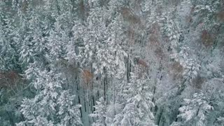 Bird's eye view of winter forest