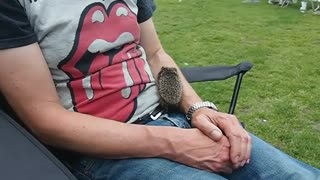 Baby Hedgehog - Video
