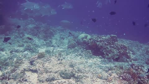 A Variety Of Fish In The Underwater World