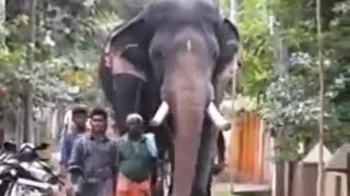 Big Elephant Celebration in India - Video