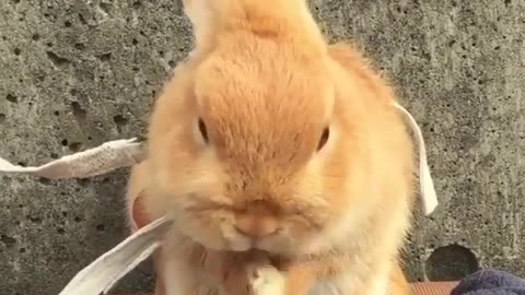 How cute is this bunny