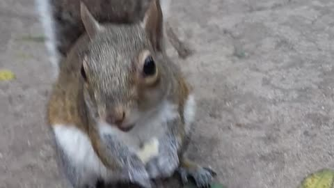 Hungry squirrel has no problem being hand-feed