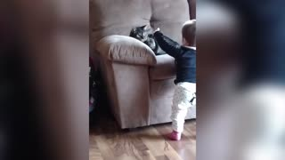 Fiesty Cat Swats Pacifier Directly Out Of Toddler's Mouth - Video