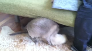 Cats Love To Fight- September 14, 2017  - Video