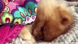 cute dog sleeping on bed like baby boy