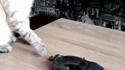 cat and toy car
