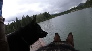 GoPro-wearing dog jumps off dock to fetch stick - Video