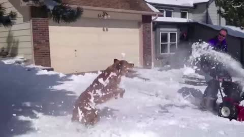 Adorable Dogs Play In The Snow Enjoying The Winter Magic
