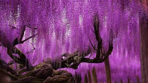 Some Of The World's Most Magnificent Looking Trees