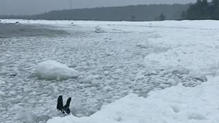 Dive into Icy Water Has Unexpected Result