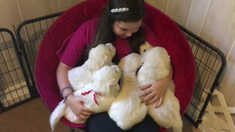 Girl shares tender moment with Golden Retriever puppies