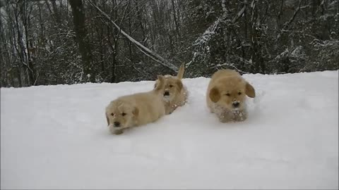 Nine Puppies Get A Chance To Play In The Snow For The 1st Time !