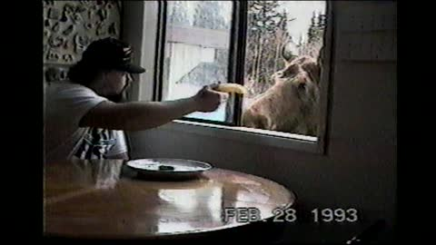 Man Feeds Moose Lunch Through His Dining Room Window
