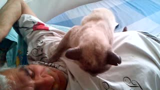 Laziest cat in the world - Video