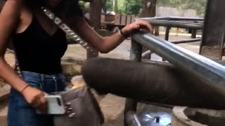 Elephant Takes Mango Filled Purse from Teen