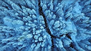 Flying over the winter forest.