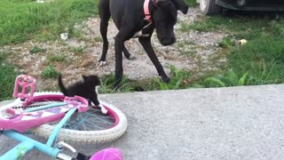 Excited Dog Can't Handle Cute Kittens - Video