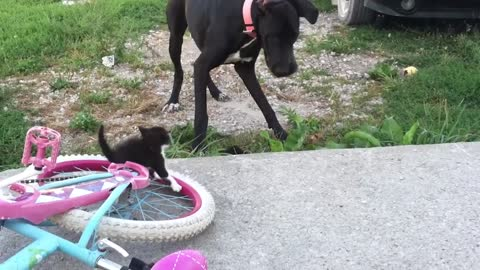 Excited Dog Can't Handle Cute Kittens