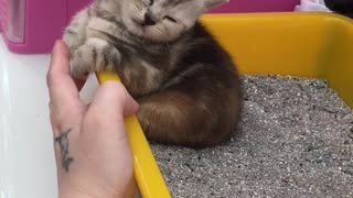 Cute Kitten Sleeps in a Strange Space