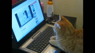 The cat is watching the cartoon on the laptop.