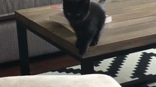Cat tries to jump on couch and falls