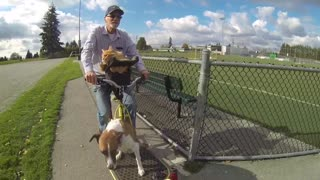 Dog and cat go for ride on owner's custom bike - Video