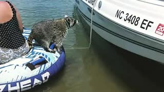 Raccoon falls into lake tries to climb on white boat