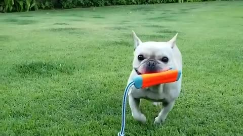 Dog Catching Each Other