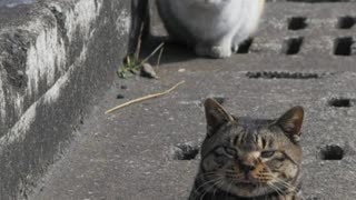 Japanese Photographer  Follows Stray Cats While They Play 'Whack-A-Mole' - Video