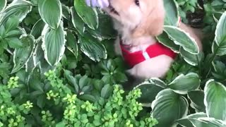 Puppy trying to eat plant - Video
