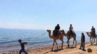 Camel Ride Journey In 3 Pools Dahab Trip