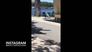 Collab copyright protection - guy wearing green pants bench thrust