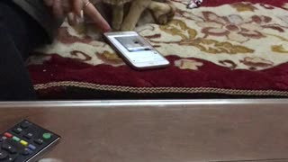 Cute Cat Plays on Smartphone