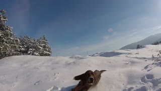 Dog goes crazy on sunny snow day