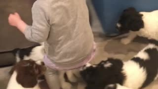 Pack of Puppies Give Girl the Giggles