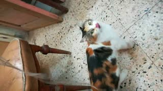 My cat wants some cat to play with every morning