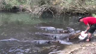 Breakfast for Alligators - Video