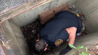 Mother duck waits as officers save ducklings