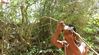 How To Catch A Wild Pig - Survival Technology: Awesome Quick Animals Net Trap