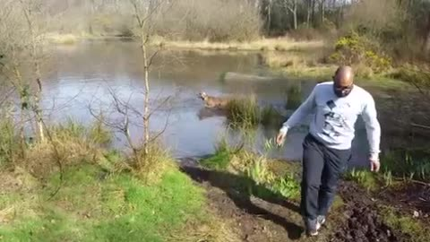 Crazy dog chaos running into lake to get a big stick