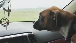 Dog tries to bite windshield wipers  - Video