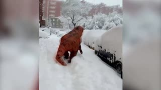 Rexy the 'dinosaur' makes snow angels in Madrid