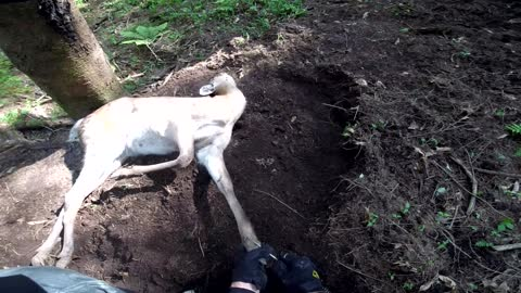 Men Come to Aid of Deer in Illegal Trap